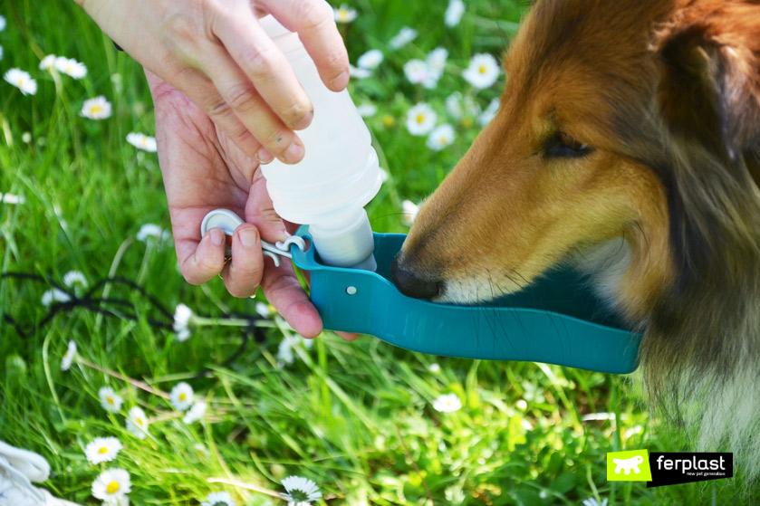 cane-disidratato