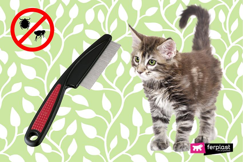 come_eliminare_pulci_zecche_gatto