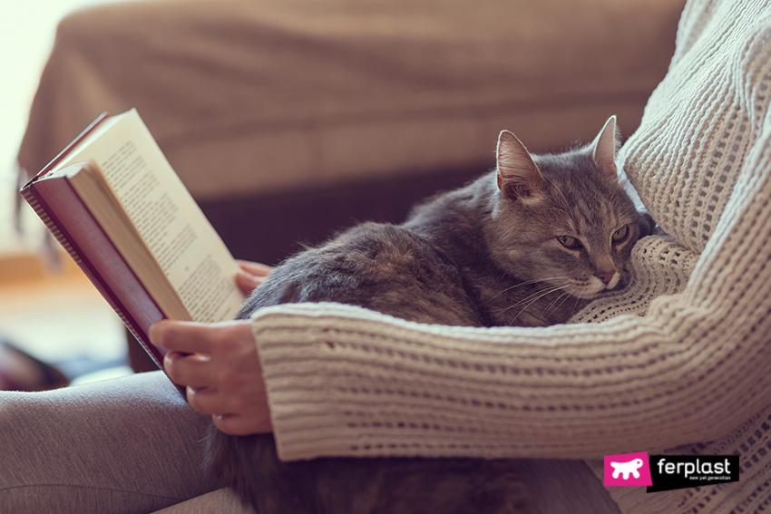 gatto_intelligenza_animali