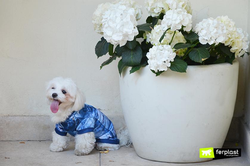 magliette_per_cani_piccola_taglia