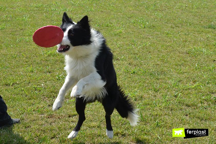 benefici_frisbee_cane_sport