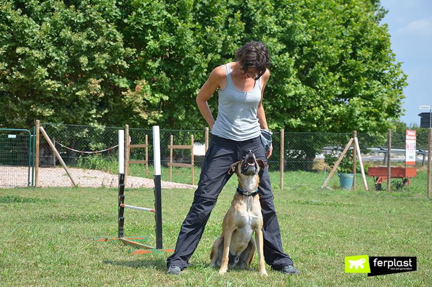 centro_cinofilo_wedogit_torri_di_quartesolo