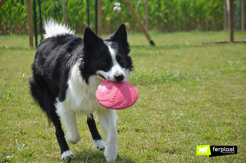 insegnare_cane_giocare_frisbee