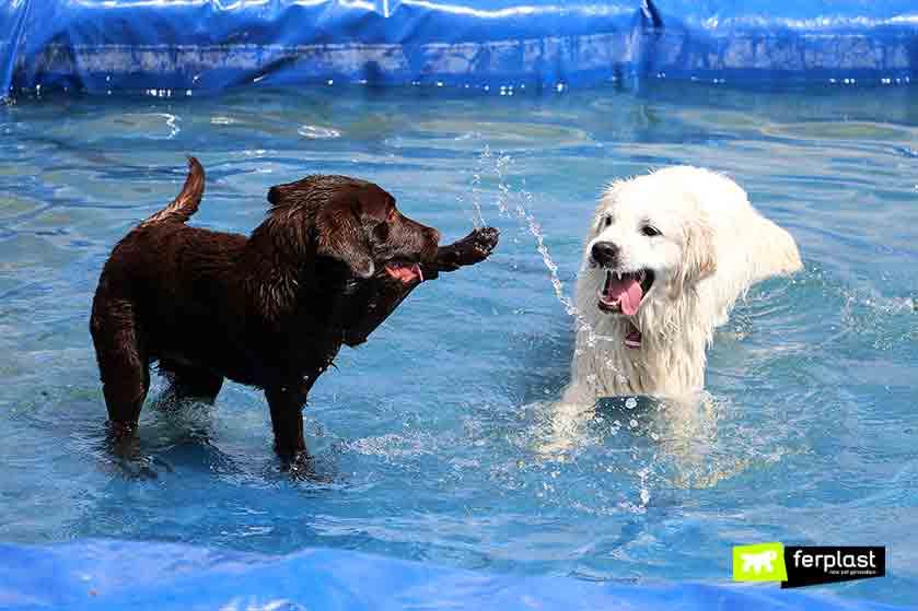piscina_per_cani_italia_dove_andare