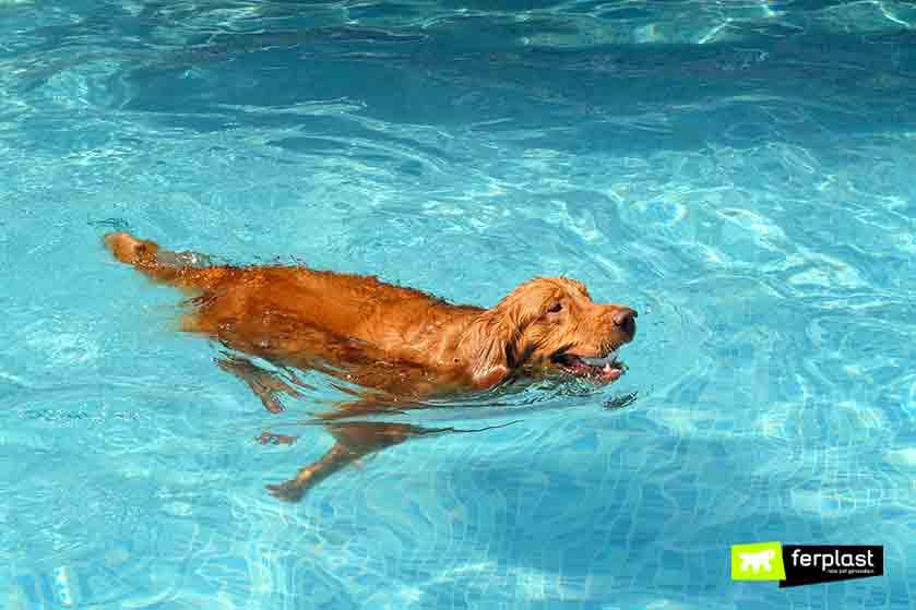 piscine_per_cani_italia