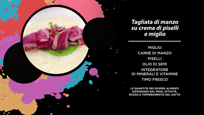 ricetta_gatto_kitchen_miao