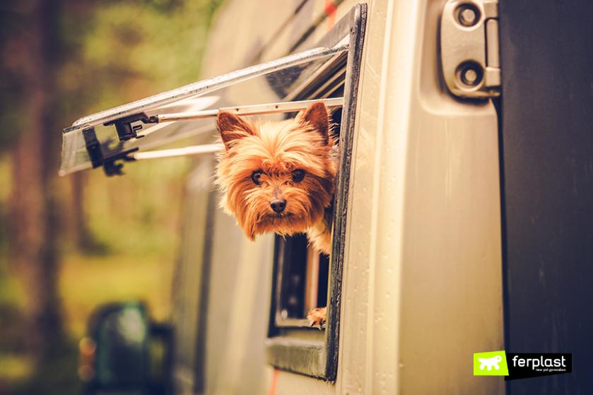 viaggiare_in_camper_con_cane_cosa_portare_consigli