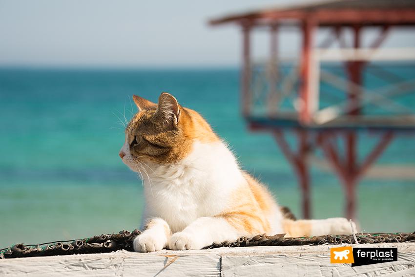 buone_vacanze_gatto_mare
