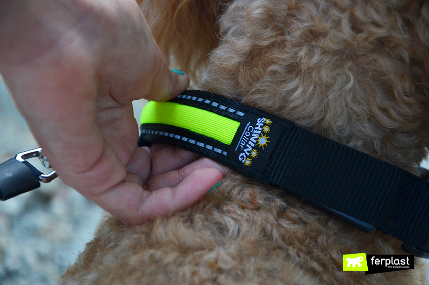 collare_Solar_Night_Collar_ferplast_opinioni