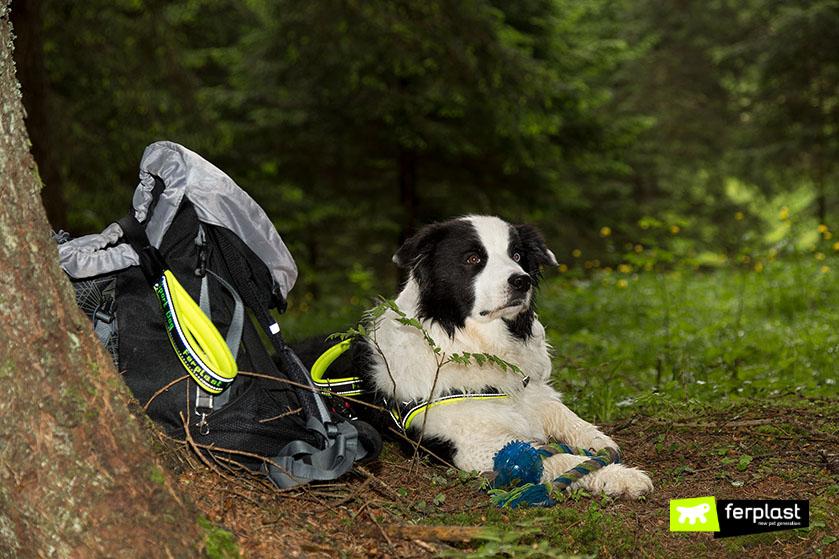 come_avviene_addestramento_cani_ricerca