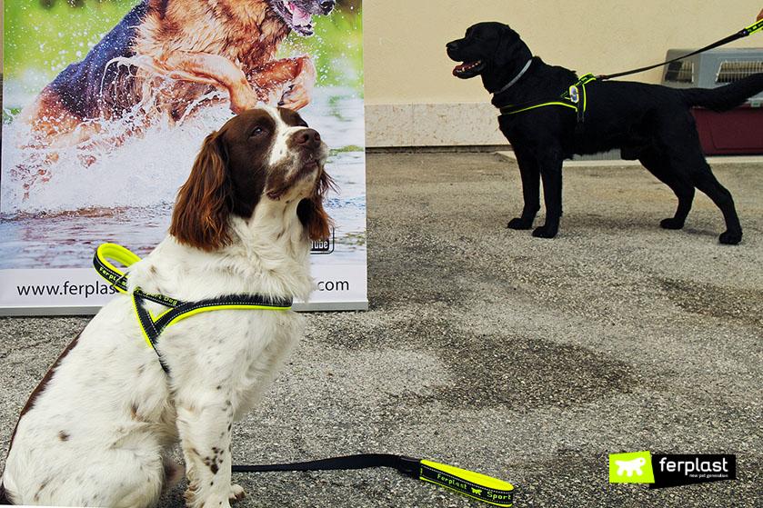 fedics_addestramento_cani_ricerca_superficie