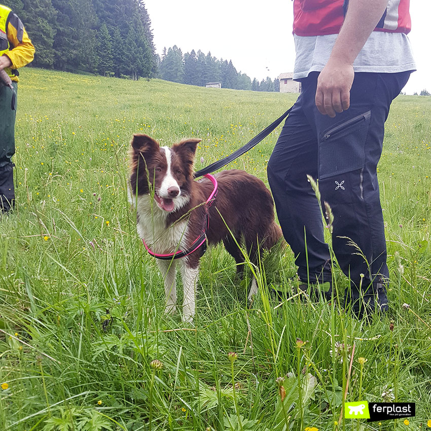 ferplast_sport_dog_pettorina