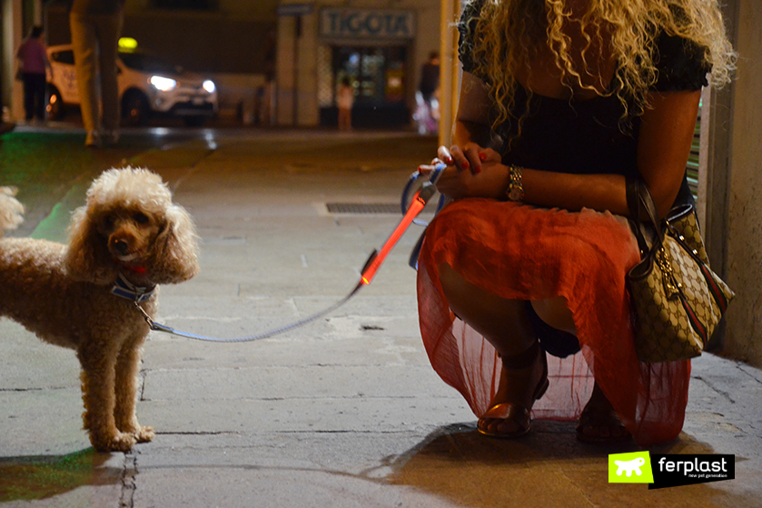passeggiate_serali_con_cane_collare_Night_Over_Collar_ferplast