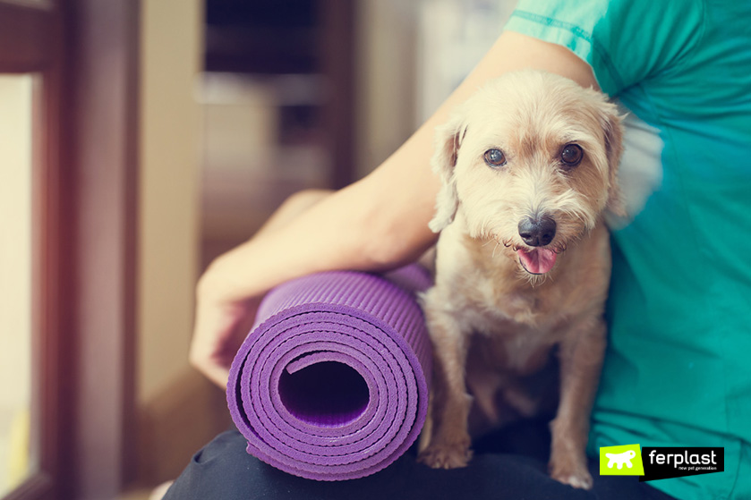 benefici_yoga_per_cani_doga