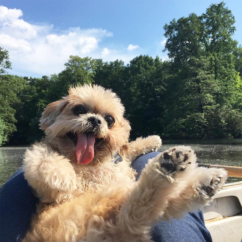 cani_famosi_marnie_the_dog
