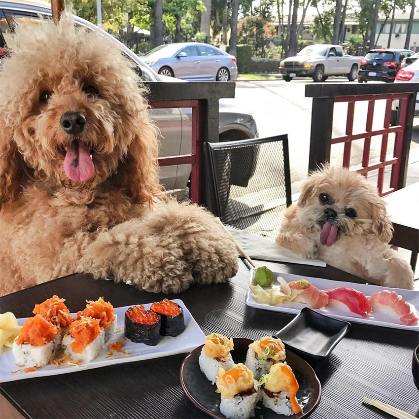 dog_influencer_marnie_the_dog_instagram
