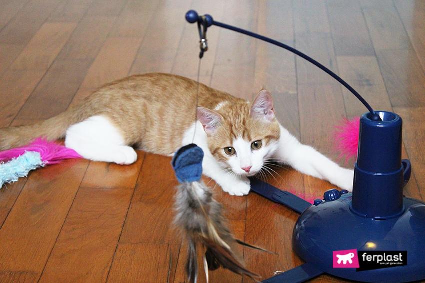 gatto_gioco_ferplast