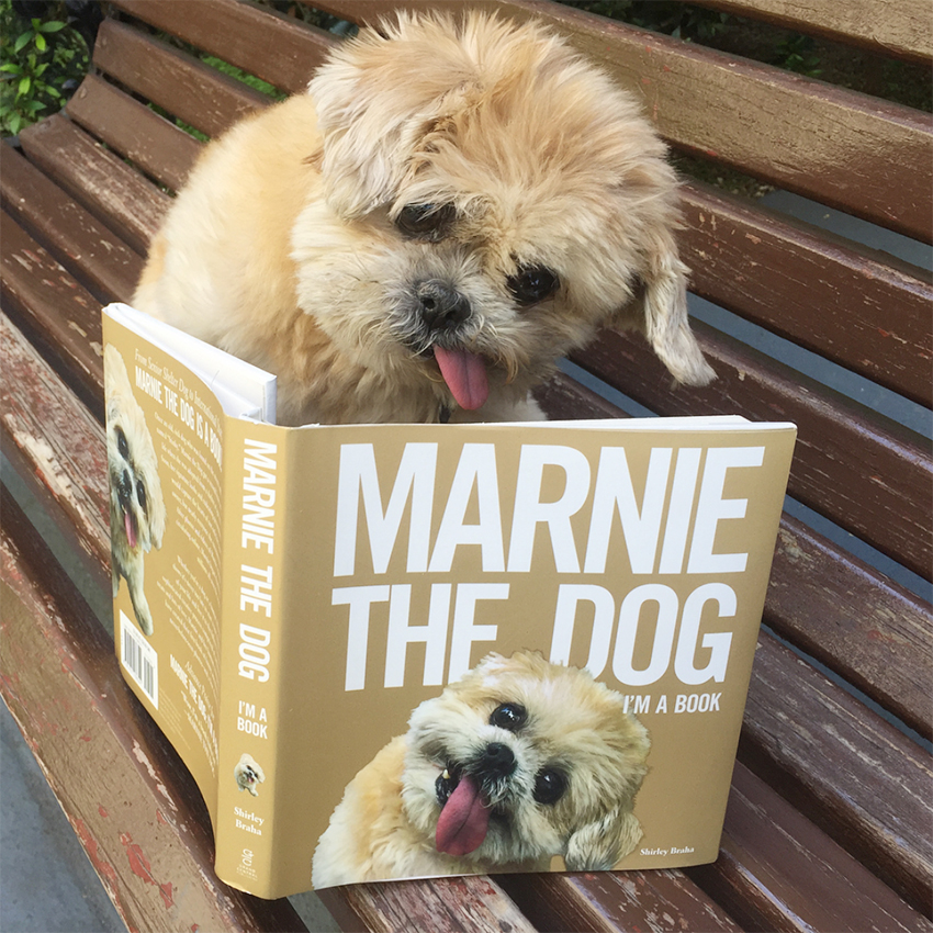 marnie_the_dog_instagram