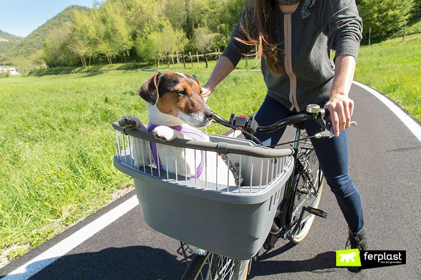 portare_cane_in_bici_cestino_atlas_bike