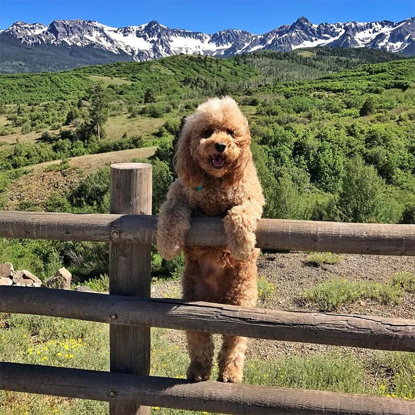 quali_sono_i_dog_influencer_blog_chi_seguire