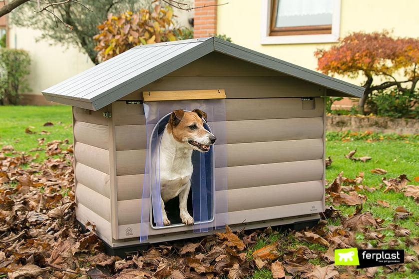 visitare_cane_dopo_vacanze