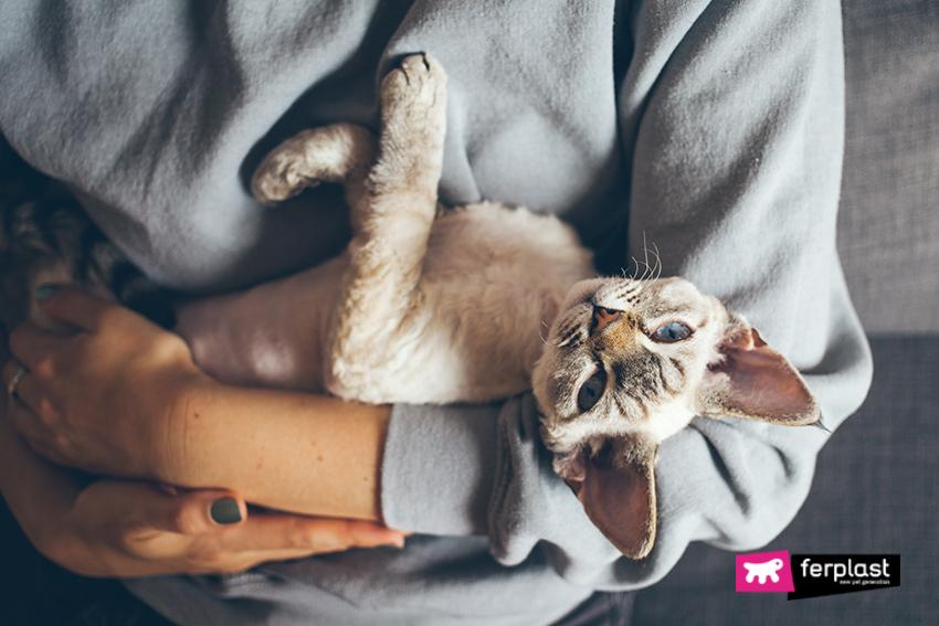 gatto_devon_Rex_caratteristiche_freddo