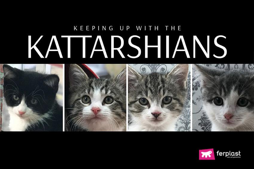 kattarshians_adottare_gatti_come_fare