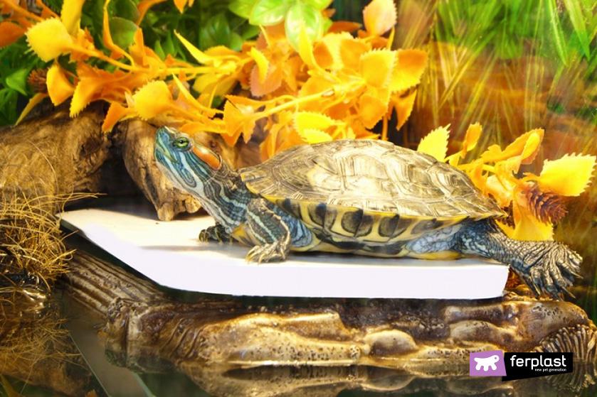 specie_tartaruga_acqua_caratteristiche