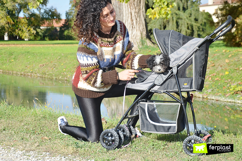 cane_piccolo_prime_passeggiate