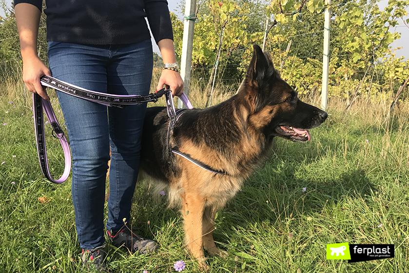pettorina_sport_dog_ferplast