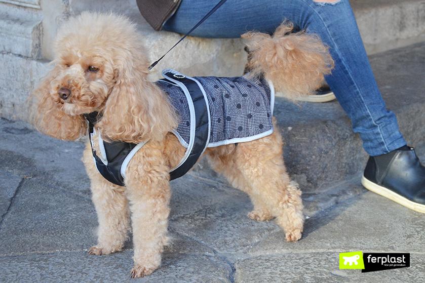 proteggere_cani_freddo_consigli