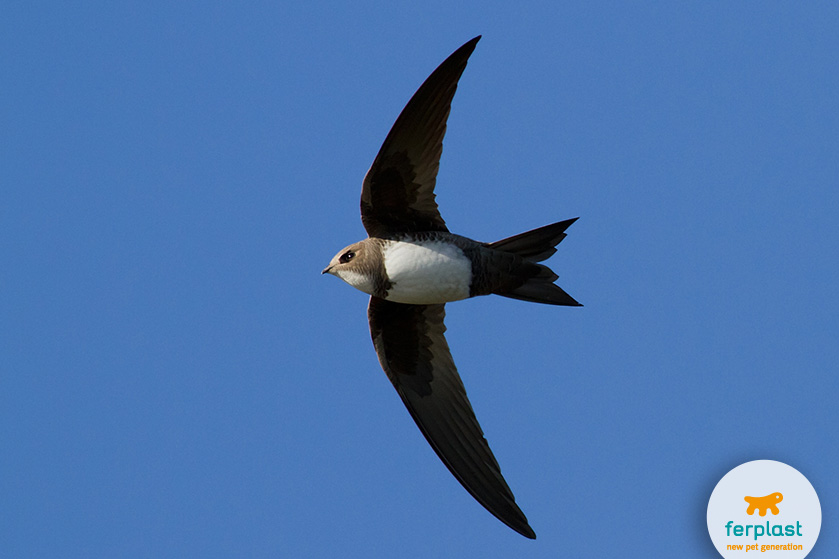 aves_migratorias_golondrinas_primavera