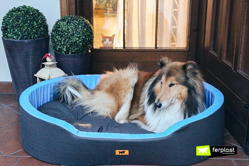 Blog_Ferplast_presentes_cama_cão
