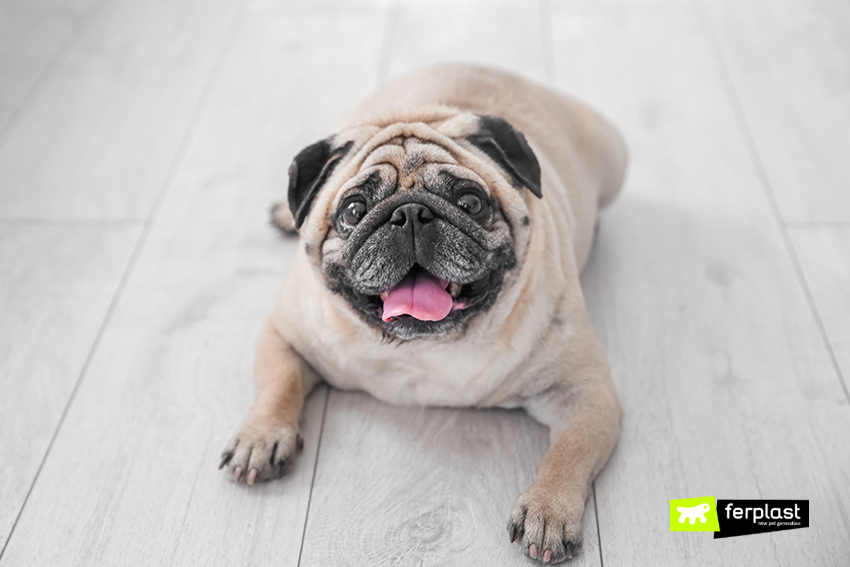 ferplast-cane-obesità-optima-ciotola-cibo-blog