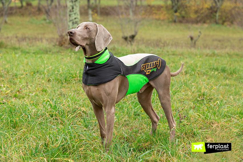 caratteristiche-cane-razza-weimaraner-carattere copia