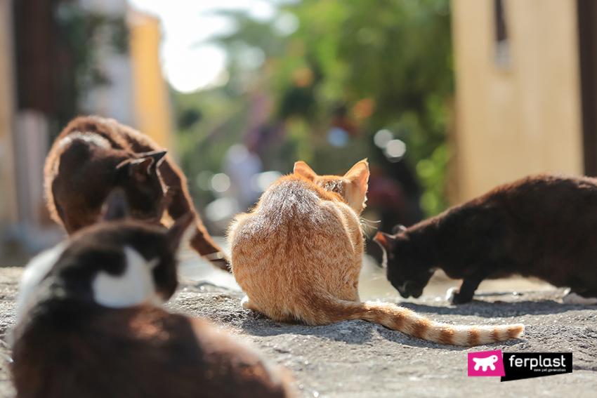colonie-feline-gatti-inverno-aiutare