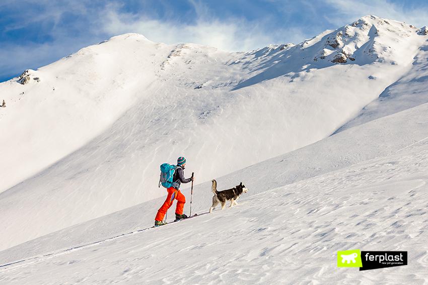 dove-portare-il-cane-sciare-italia