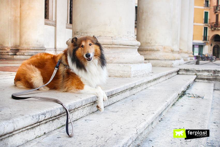 ferplast-blog-dove-portare-il-cane-musei-italia-museo-automobile-milano-bicocca-torino-sud-italia