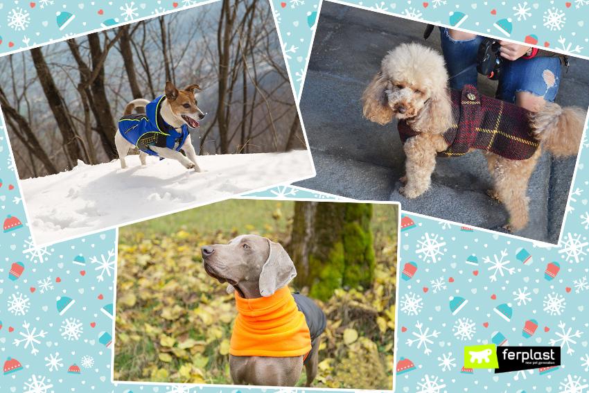 ferplast-blog-saldi-cappottini-invernali-cani