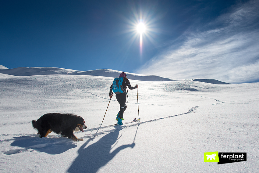ferplast-dove-sciare-con-il-cane-tirolo
