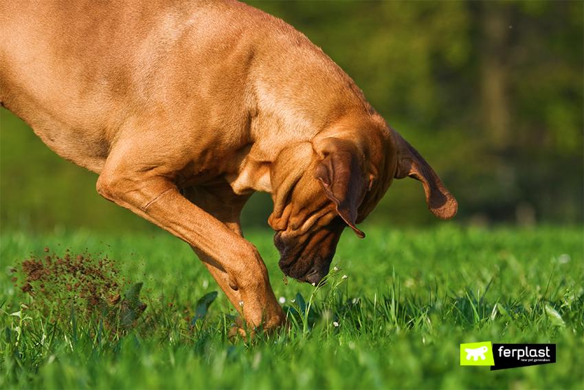 ferplast-perchè-cane--buche-giardino