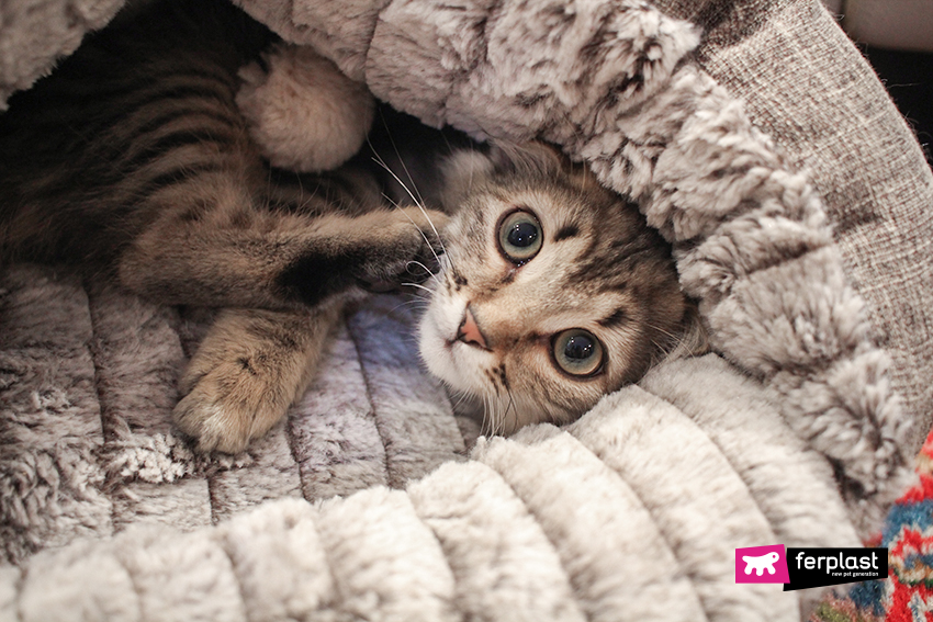 gatto-cuccia-tufli-ferplat