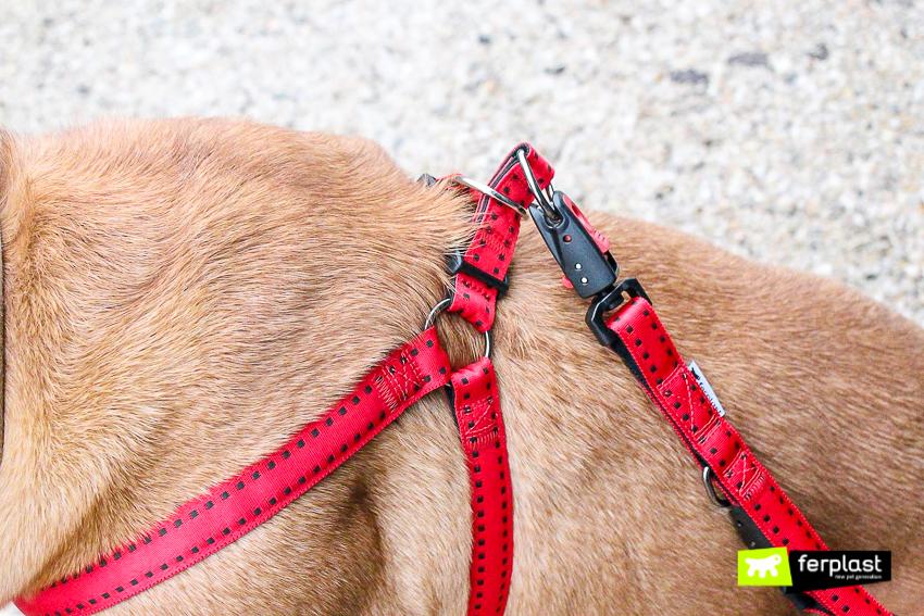 cane-dog-passeggiare-con-collare-ferplast