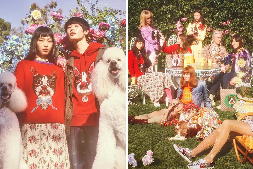 ferplast-moda-2018-trend-cane-dog