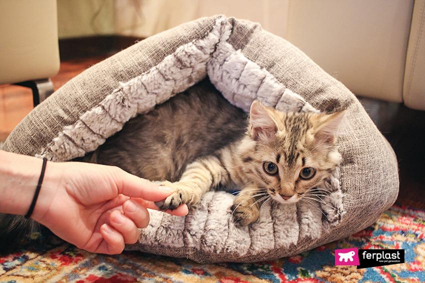 gatto-capire-fusa-blog