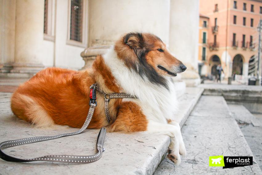 guinzaglio-migliore-per-cani