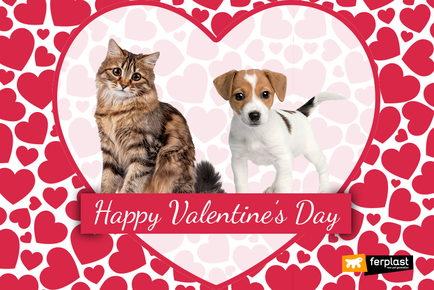 saint-valentine-day-dog-cat